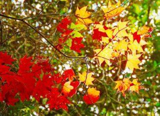 mùa lá đỏ việt nam