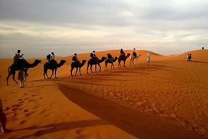 Hóa thân thành dân du mục cưỡi lạc đà trên sa mạc